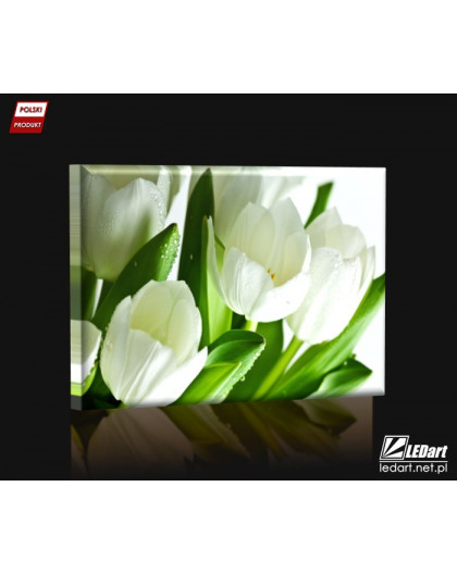 Białe tulipany DESIGN Obraz z oświetleniem LED prostokątny