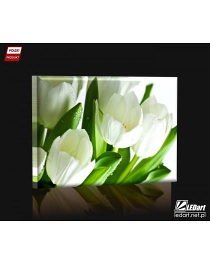 White tulips DESIGN rectangular