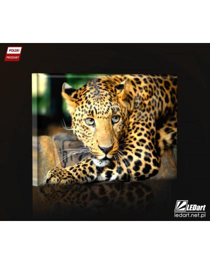 Leopard DESIGN rectangular