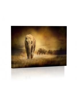 Słonie DESIGN Obraz z oświetleniem LED prostokątny