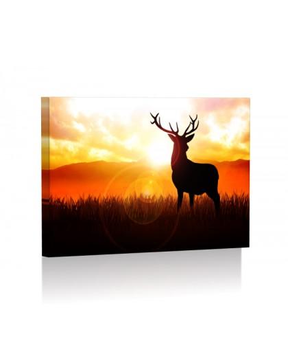 Deer DESIGN rectangular