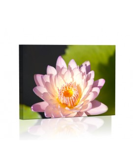Water lily DESIGN rectangular