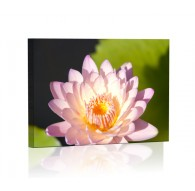 Lilia wodna DESIGN Obraz z oświetleniem LED prostokątny