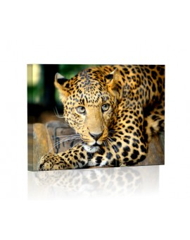 Leopard DESIGN rectangular