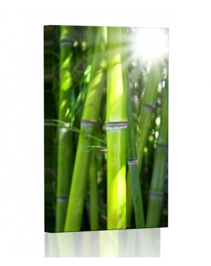 Bamboo DESIGN vertical
