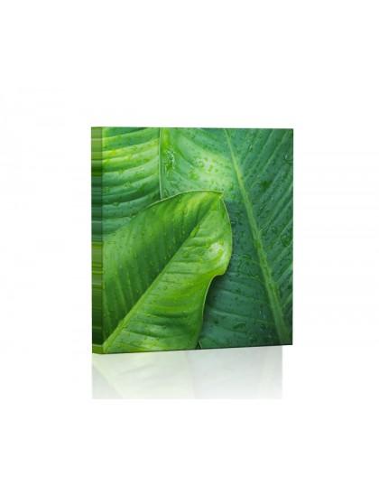 Tropikalne liście bananowca Obraz podświetlany LED