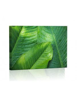 Banana leaves DESIGN Lamp backlit