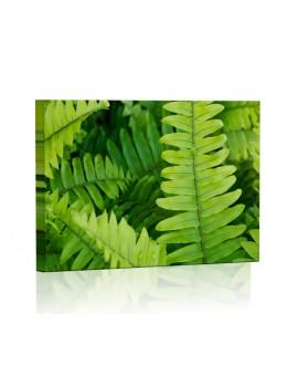 Zielone liście paproci Obraz podświetlany LED