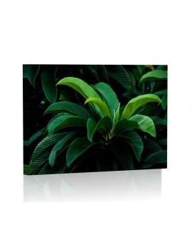 Tropikalne liście Obraz podświetlany LED