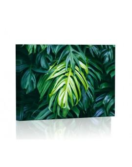 Tropikalne liście fitodendron Obraz podświetlany LED